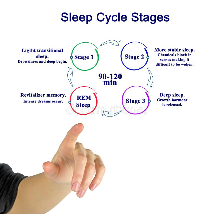 Sleep Cycle Stages. Woman presenting Sleep Cycle Stages royalty free stock image