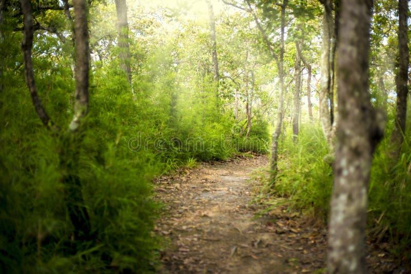 Sleep in de berg en het bos van nationaal park in Thailand Er zijn beroemd voor en wandelingstrekking die beklimmen wandelen stock afbeelding