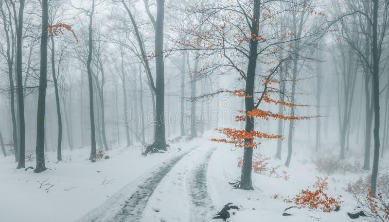 Sleep die in sneeuw in romantische mistige bosbomen met rode bladeren wordt behandeld De winter koude dag stock afbeelding