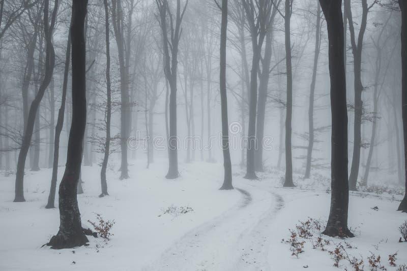 Sleep die in sneeuw in romantische mistige bosbomen met rode bladeren wordt behandeld De winter koude dag stock foto