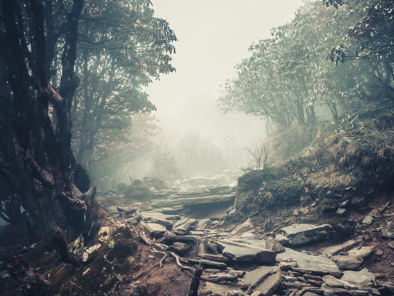 Sleep door een geheimzinnig bos stock afbeelding