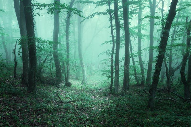 Sleep door een geheimzinnig donker bos in mist met groene bladeren stock afbeelding