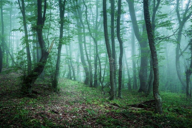 Sleep door een geheimzinnig donker bos in mist met groene bladeren royalty-vrije stock foto
