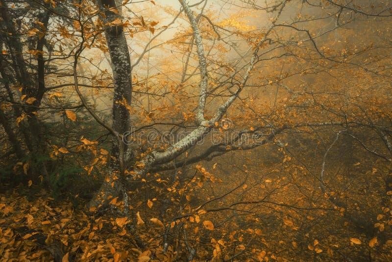 Sleep door een geheimzinnig donker oud bos in mist De herfst stock afbeeldingen