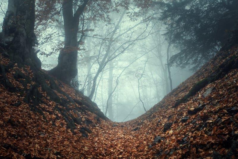 Sleep door een geheimzinnig donker oud bos in mist De herfst royalty-vrije stock fotografie
