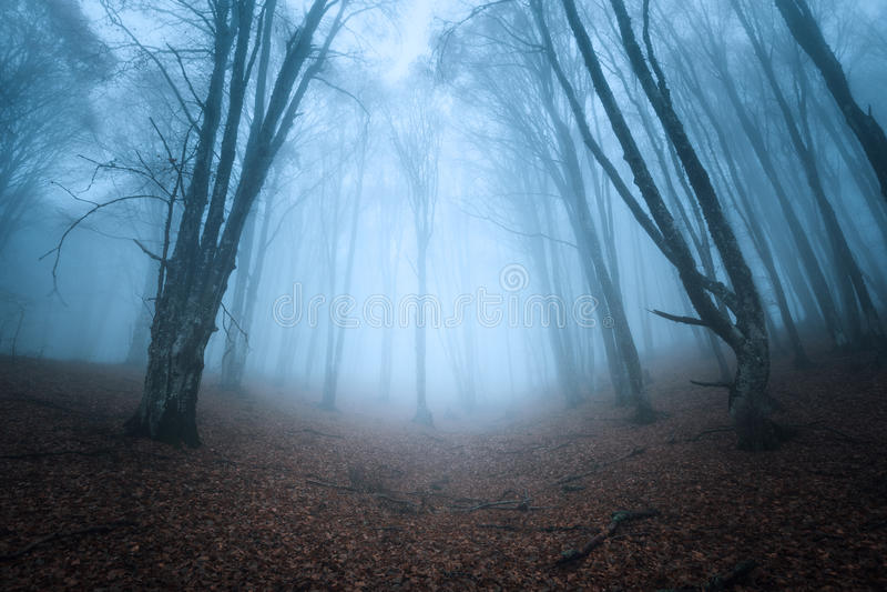 Sleep door een geheimzinnig donker oud bos in mist De herfst royalty-vrije stock afbeeldingen