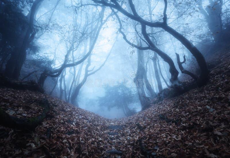 Sleep door een geheimzinnig donker oud bos in mist De herfst stock fotografie