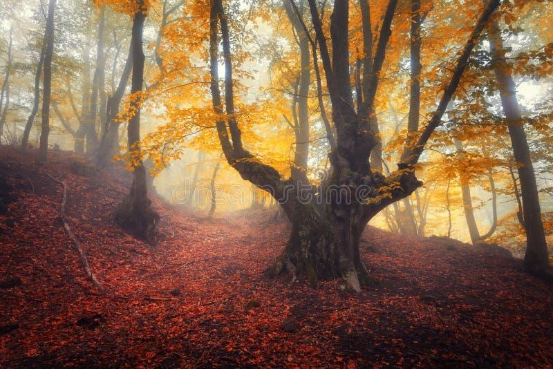 Sleep door een geheimzinnig donker oud bos in mist De herfst royalty-vrije stock afbeelding