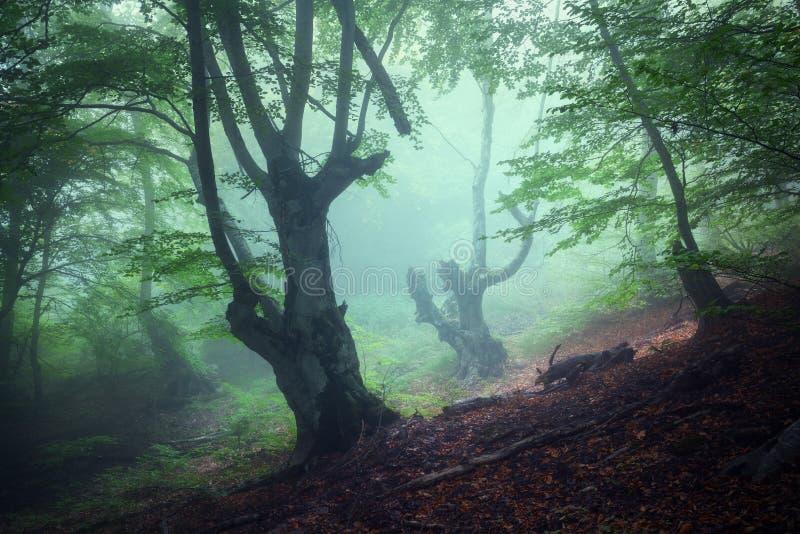 Sleep door een geheimzinnig donker oud bos in mist De herfst royalty-vrije stock foto's