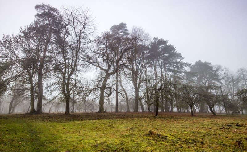 Sleep door een geheimzinnig donker oud bos in mist De herfstochtend royalty-vrije stock foto's