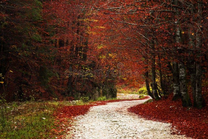 Sleep in een bos tijdens de herfst royalty-vrije stock foto