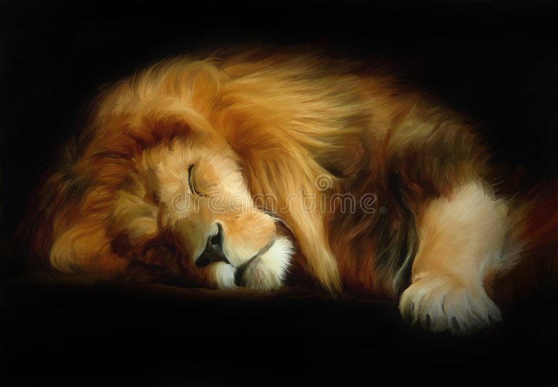 Download Sleep lion stock illustration. Image of wild, nature, detail - 6813702