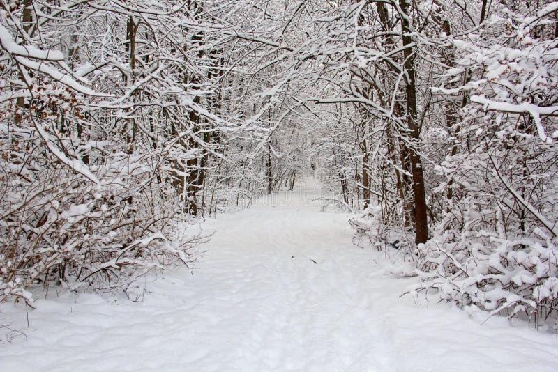 Sleep na verse sneeuw royalty-vrije stock fotografie