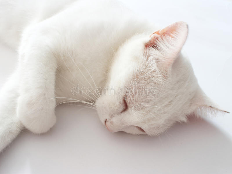 Sleep white cat royalty free stock photos