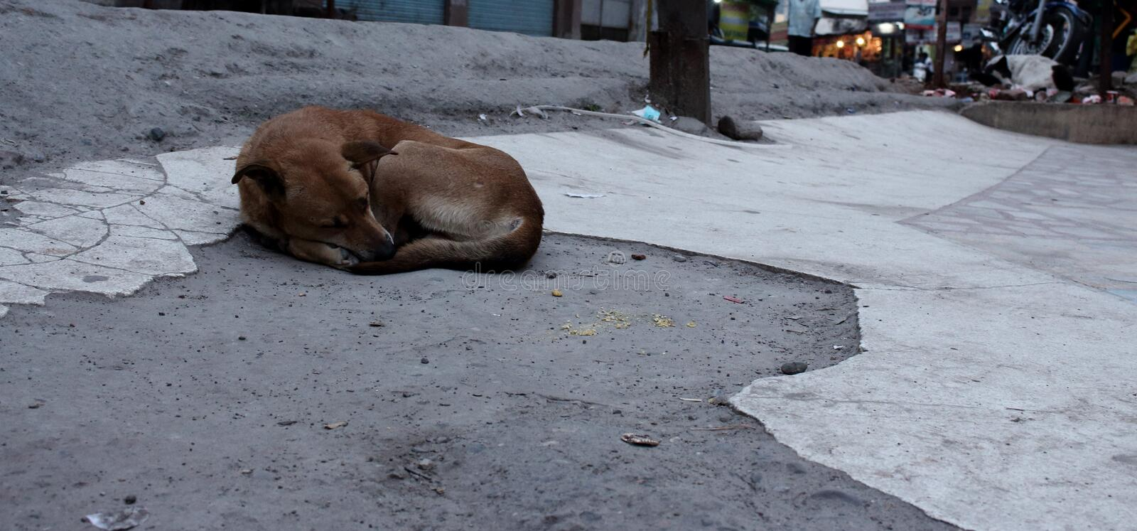 Sleeping abandoned lonely dog on asian city street in evening. stock image
