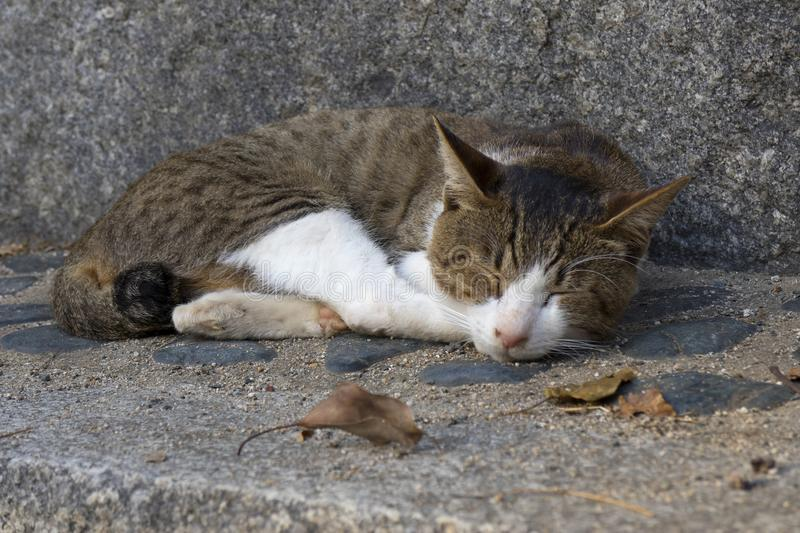 Sleeping alley cat on the street. In autumn stock images