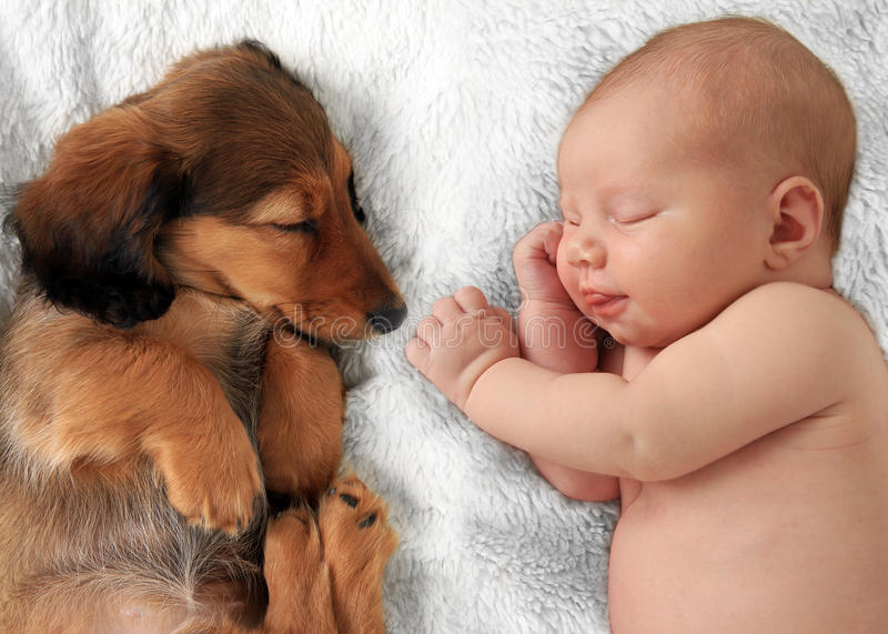 Sleeping baby and puppy. Newborn baby girl and dachshund puppy asleep on a white blanket