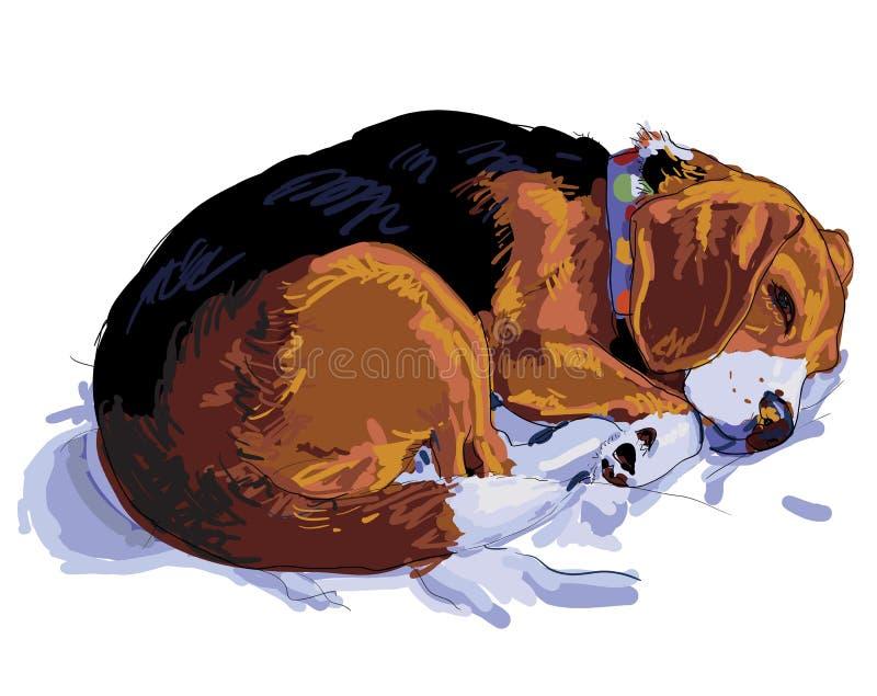 Sleeping beagle. Beagle is sleeping on her cushion vector illustration