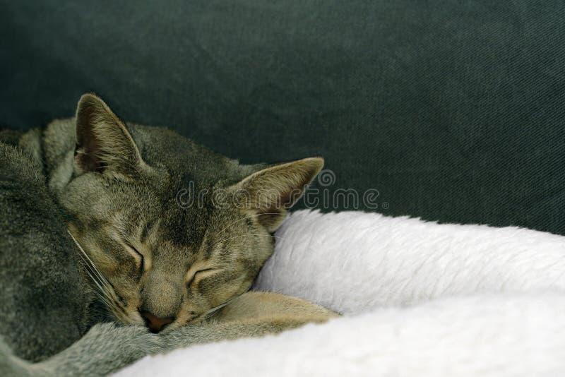Download Sleeping beauty stock photo. Image of inside, doze, comfortable - 394328