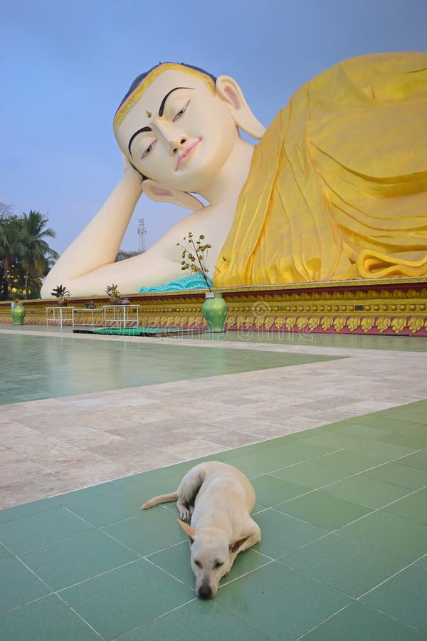 Free Sleeping Buddha Statue Looking At A Stray Dog Sleeping With A Smile In Buddhist Temple Royalty Free Stock Image - 133243616
