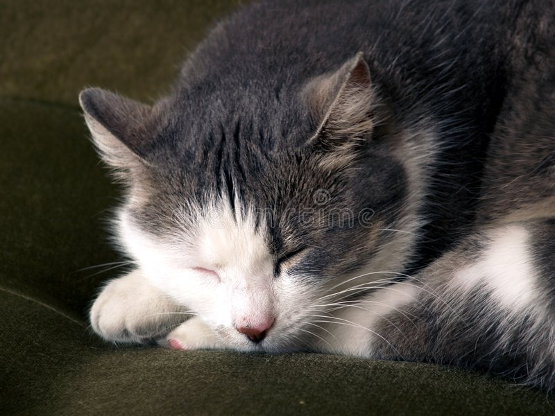 Sleeping cat. Home cat sleeping on couch royalty free stock photo