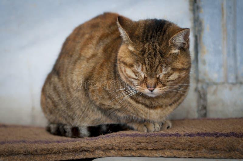 Download Sleeping cat stock photo. Image of adorable, pretty, doorstep - 25951472