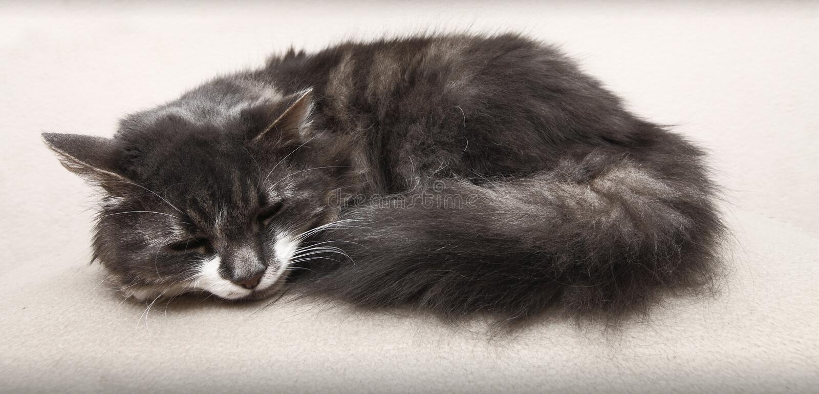 Download Sleeping cat stock image. Image of fury, gray, adorable - 28661391