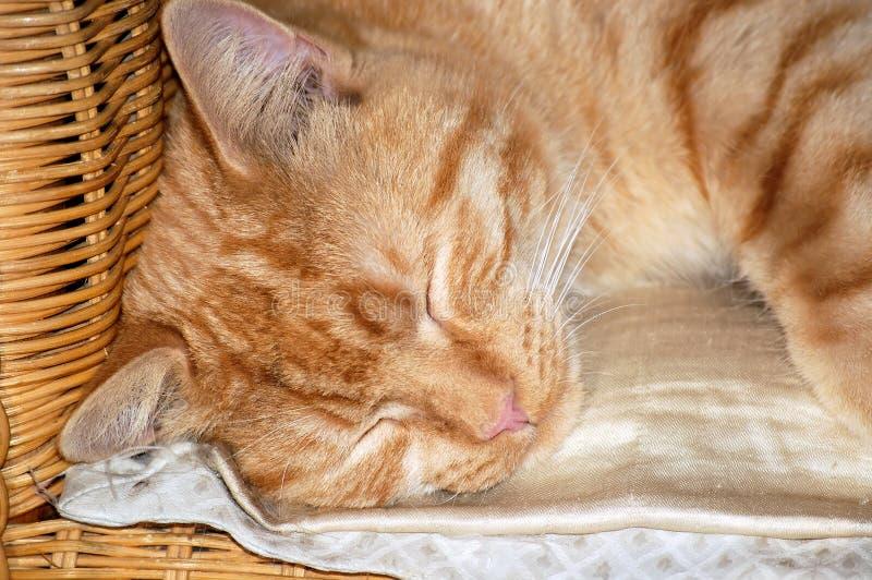 Download Sleeping Cat Stock Photo - Image: 4948620