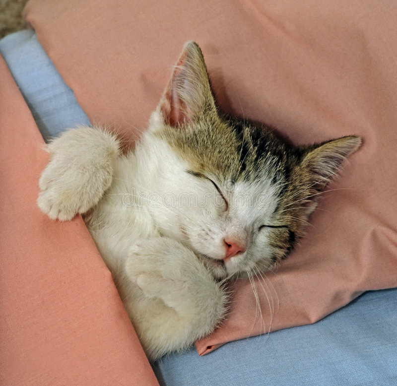 Download Sleeping cat stock photo. Image of sleeping, kitty, toddlers - 5069460