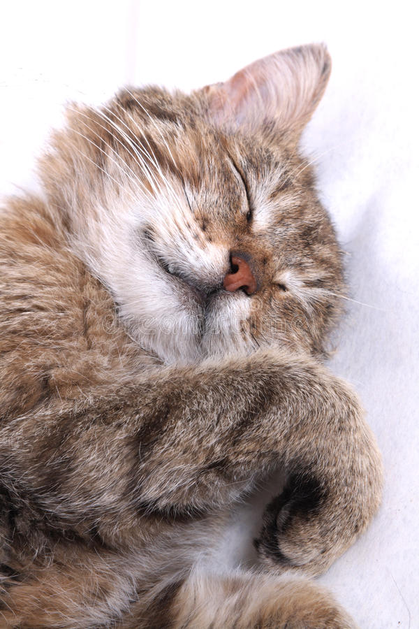 Sleeping cat. Blindly and a fluffy striped skin royalty free stock photo