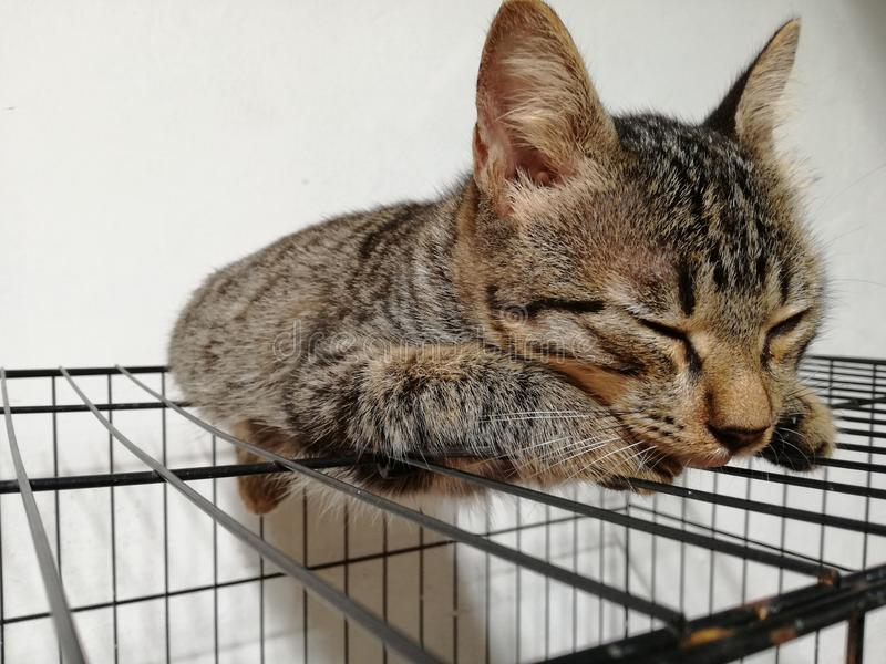 Sleeping cat. A brown beutiful domestic cat sleeping under her cage stock photo