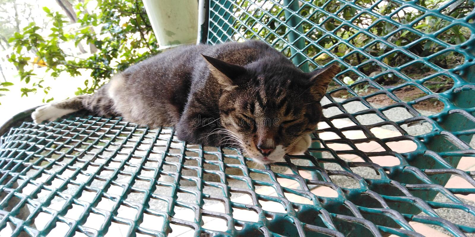 Sleeping cat. Cat taking a nap on a bench in Singapore royalty free stock photography