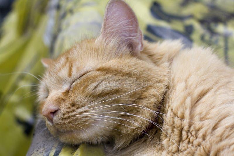 Download Sleeping Cat Royalty Free Stock Image - Image: 32298906