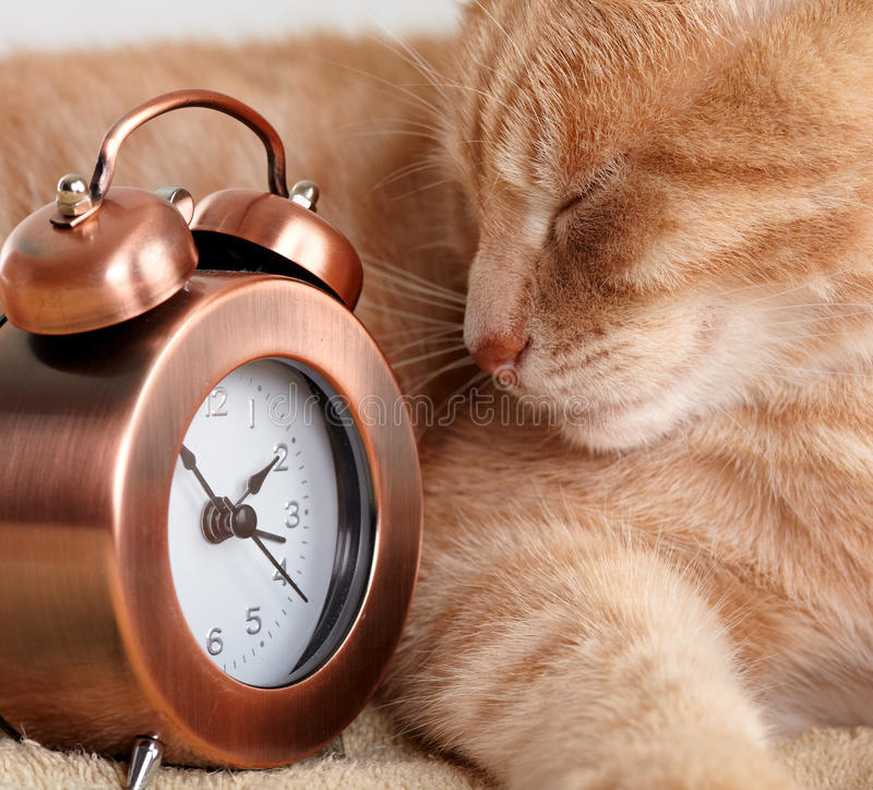 Download Sleeping cat. stock image. Image of puss, feline, domestic - 35582519