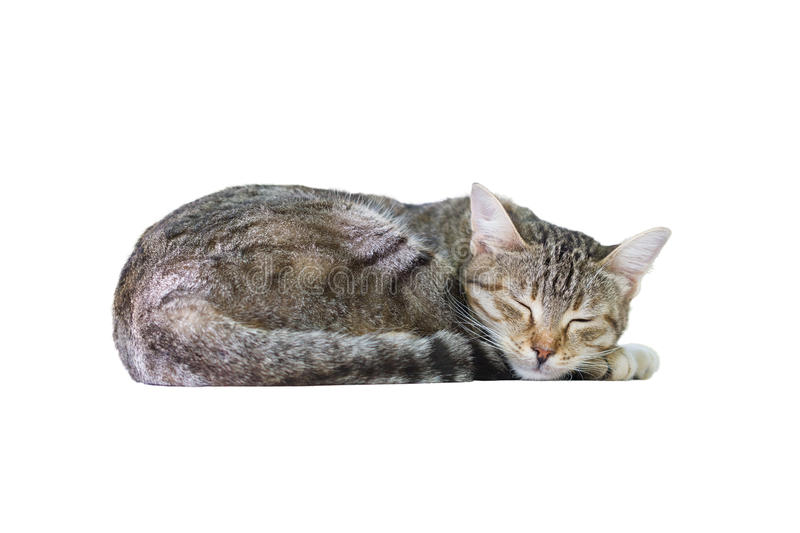 Download Sleeping Cat stock photo. Image of cosy, striped, isolated - 34950356
