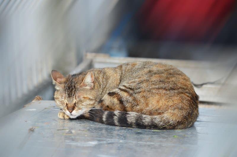 Sleeping cat in Istanbul, Turkey royalty free stock photo