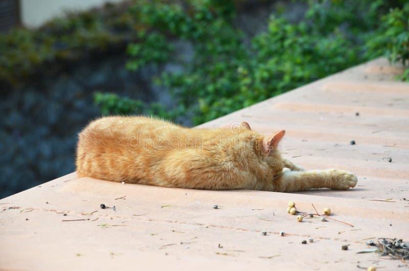 Sleeping cat, Istanbul, Turkey stock images