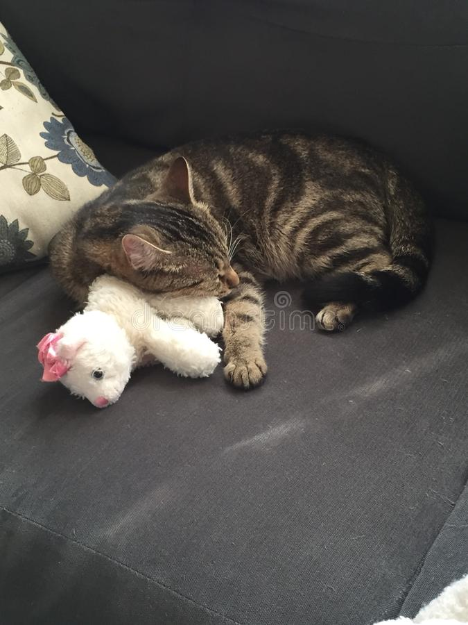 A Cat and Her Kitten Plush. A sleeping cat naps upon her favorite toy royalty free stock image