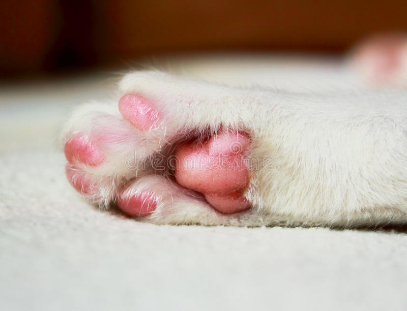 Sleeping cat paw royalty free stock images