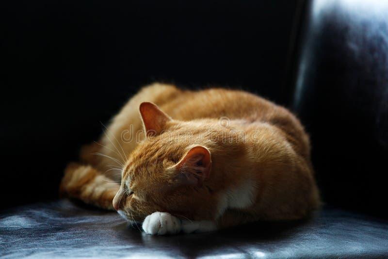Sleeping Cat Free Public Domain Cc0 Image