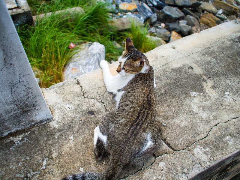 The sleeping cat sleeps on the overpass before boarding a boat. stock photo