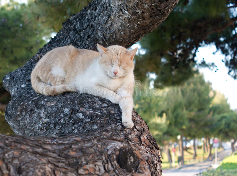 Download Sleeping cat on tree stock image. Image of vacation, greece - 20907245