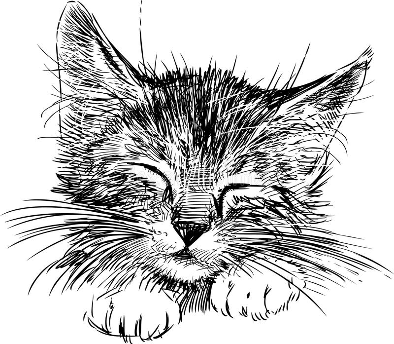 Sleeping cat. Vector image of a head of a little sleeping cat