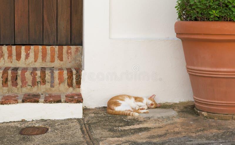 Sleeping cat. White and orange cat sleeping at the doorstep royalty free stock photo