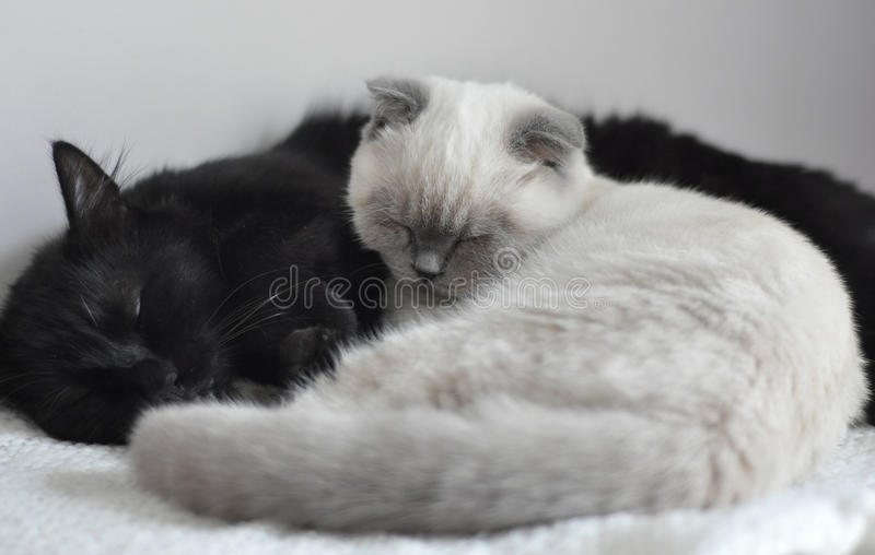 Download Sleeping Cats stock image. Image of black, blanket, sleep - 27203441