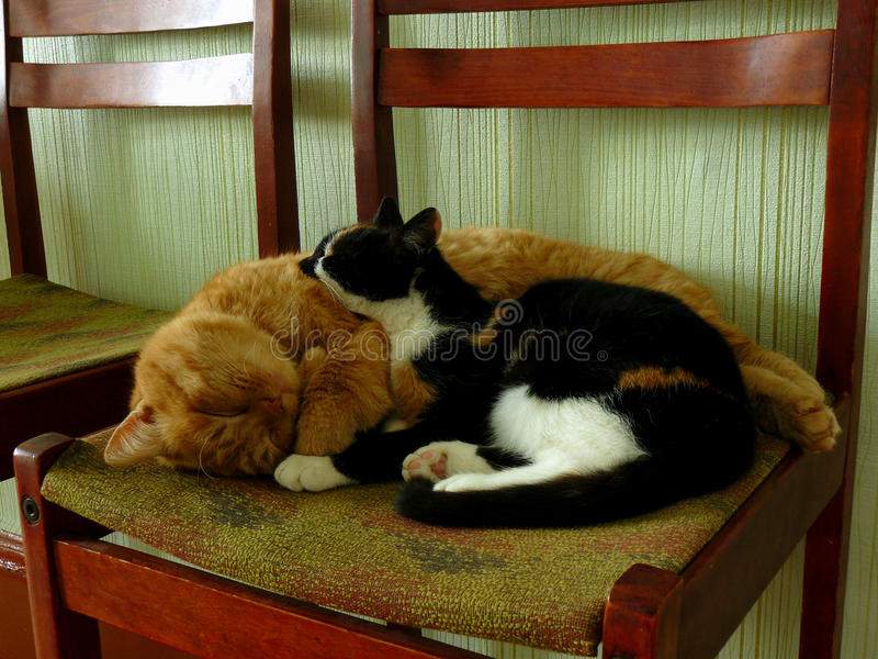 Sleeping cats royalty free stock images