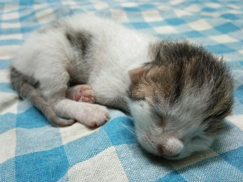 Sleeping Cute Baby Cat royalty free stock images