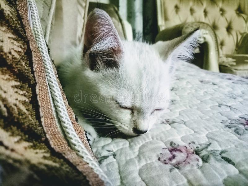 sleeping cute little kitten stock photography