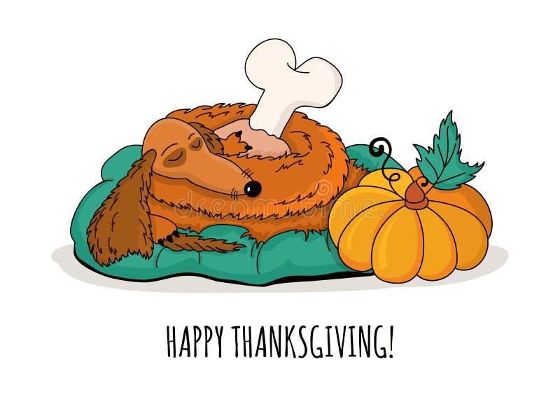Sleeping dachshund dog with turkey leg and pumpkin, on. Happy Thanksgiving greeting card. Hand drawn doodle sleeping dachshund dog with roasted turkey leg and royalty free illustration