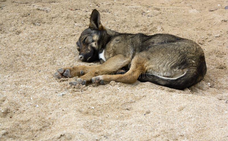 Download Sleeping Dog Royalty Free Stock Photos - Image: 23579178